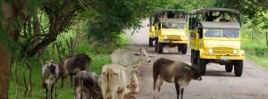 Vallarta Adventure Trucks